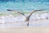 Sea gull at the beach — Stock Photo