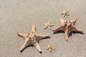 Sea-stars lying on wet sand beach in sea wave — Stock Photo