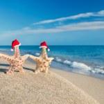 Sea-stars couple in santa hats walking at beach. Holiday concept — Stock Photo