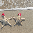 Sea-stars couple in santa hats — Stock Photo