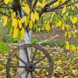Stock Photo: Cart wooden wheel on autumn yellow leaves under tree