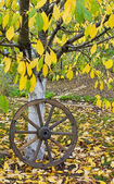 Cart wooden wheel on autumn yellow leaves under the tree — Stock Photo