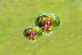 Two heart shaped iridescent soap bubbles — Stock Photo
