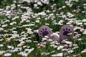 Little shoes on flowery meadow — Stock Photo
