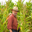 Farmer on the field of maize — Stock Photo #12204848