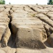 Stock Photo: Soil erosion to overgrazing leading