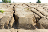 Soil erosion to overgrazing leading — Stock Photo