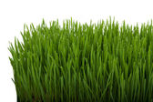Close up of fresh thick grass — Stock Photo
