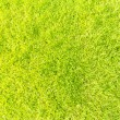 Green grass background texture tilted — Stock Photo