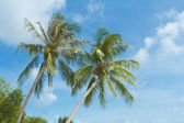 Sea and coconut palm — Stock Photo