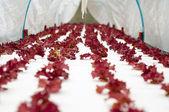Tête de laitue rouge qui poussent dans le jardin — Photo