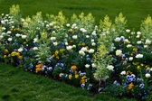 Flowers on Champs-Elysee — Stock Photo