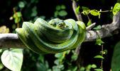 青蛇 — 图库照片