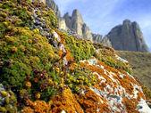 Colorful lichen — Stock Photo