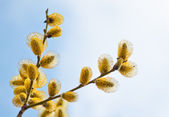 Easter willow branches — Stock Photo