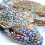 Blue crab. — Stock Photo