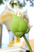 Flor de loto en templo — Foto de Stock