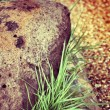 Stock Photo: Stone and green grass