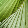 Stock Photo: Palms leaves.