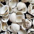 Shell — Stock Photo #31627865