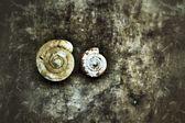 Nautilus shell. — Stock Photo