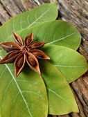 Star anise and bay leaf — Stock Photo