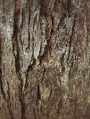 Old wood background — Foto Stock