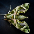 Green butterfly — Stockfoto #33387095