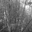 Bamboo forest — Foto de Stock