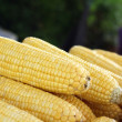 Stock Photo: Fresh sweetcorn