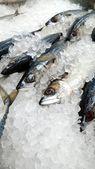 Färsk makrill fisk — Stockfoto