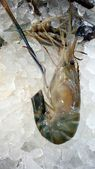 Fresh shrimp — Stock Photo