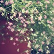 Baby's breath flowers — Stock Photo #36903123