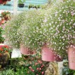 Baby's breath flowers — Stock Photo