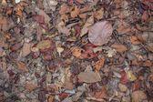 干的树叶 — 图库照片