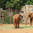 Stock Photo: Elephant family