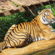 Bengal tiger sitting — Stock Photo #37352487