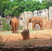Elephant family — Stock Photo