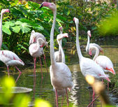 Flamingo — Stock fotografie
