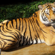 Bengal tiger sitting — Stock Photo #37473829