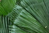 Palms leaves — Stock Photo