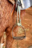 Stirrup on horse — Stock Photo