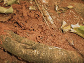 Termite nest — Stock Photo