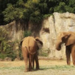 Stock Video: Elephant