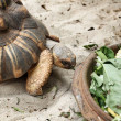 Crawling tortoise — Stock Photo