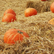 Stock Photo: Harvest fresh pumpkin orange in farm