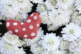 Red fabric heart on flowers — Stockfoto