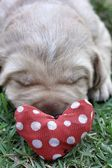 Sleeping labrador puppies on green grass — Stock Photo