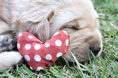 緑の草のラブラドール子犬を眠っています。 — ストック写真