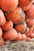 Harvest fresh pumpkin orange — Stock Photo
